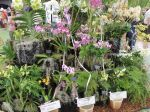 Winning entries at the Kunia Orchid Show.
