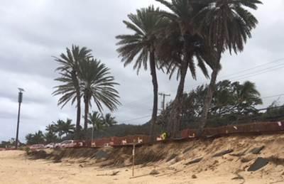 Sunset Beach Date Palm Trees